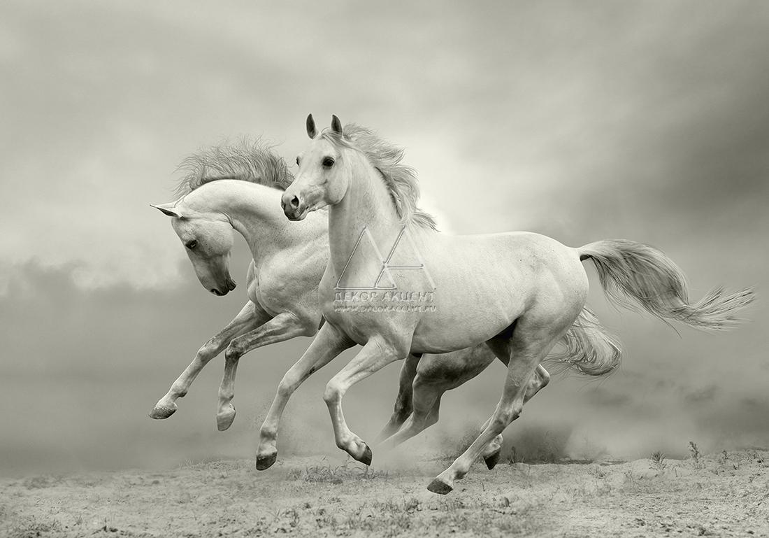 White horses running wallpaper